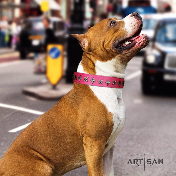 Amstaff daily use genuine leather dog collar with decorations