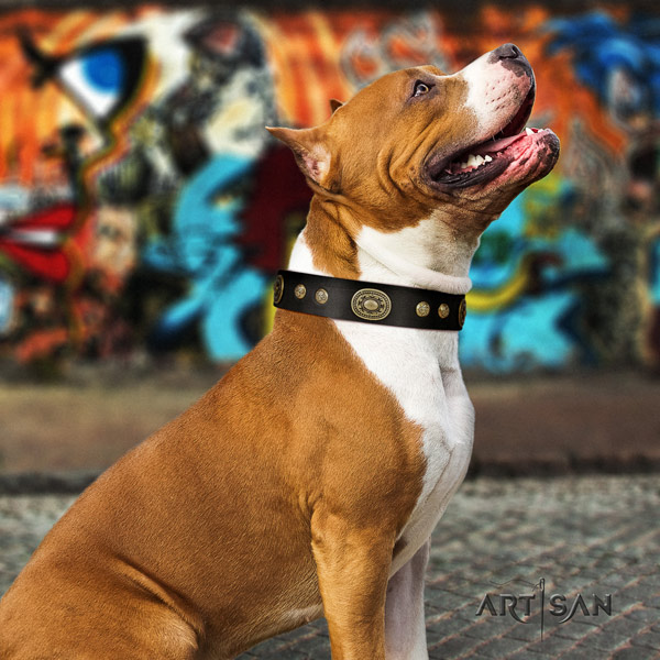 Amstaff basic training natural genuine leather dog collar with embellishments