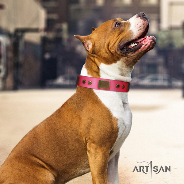 Amstaff daily walking full grain leather dog collar with studs