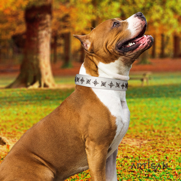 Amstaff everyday use full grain natural leather dog collar with embellishments