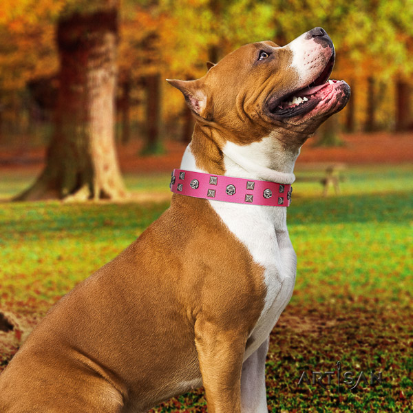 Amstaff easy adjustable full grain leather dog collar for daily use