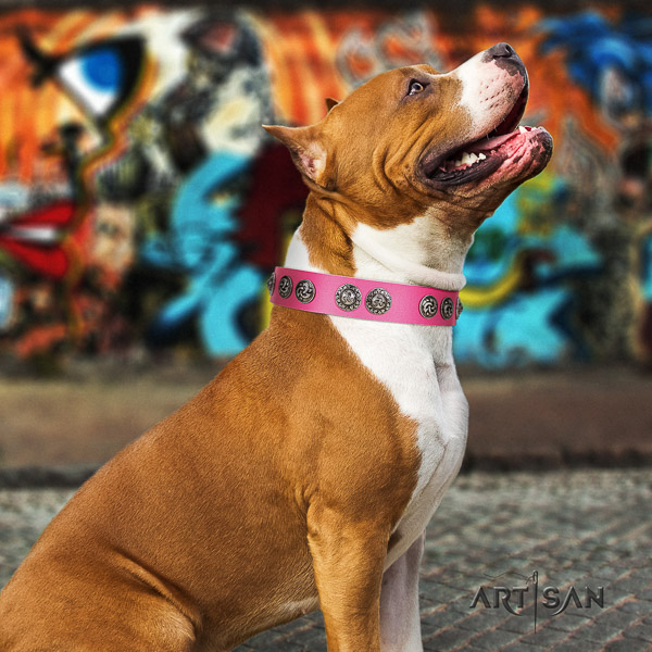 Amstaff impressive full grain leather dog collar for handy use