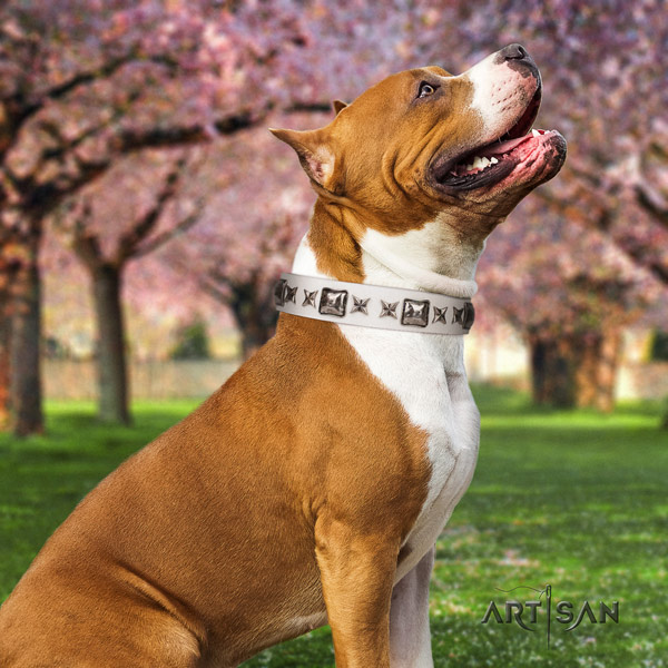 Amstaff awesome genuine leather dog collar with adornments for walking