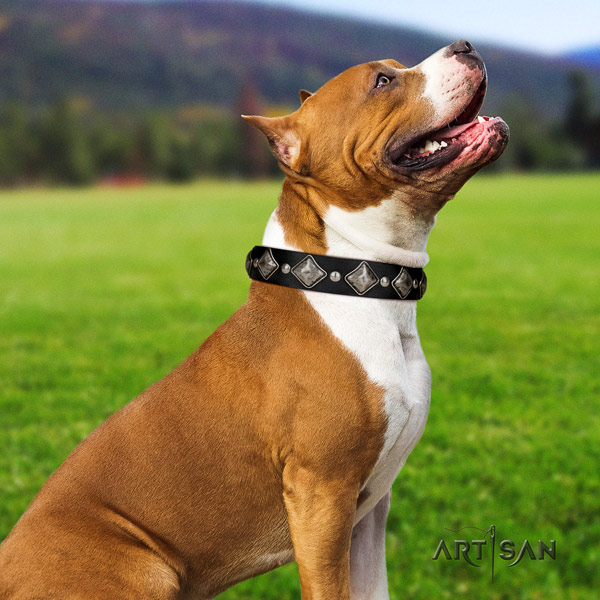 Amstaff trendy genuine leather dog collar with embellishments for fancy walking