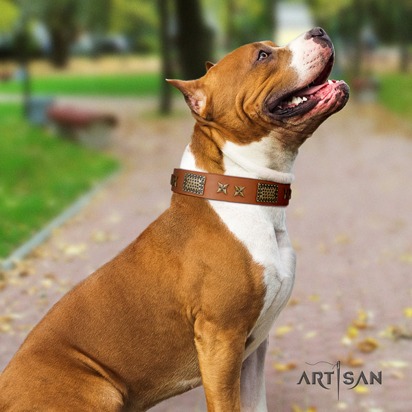 Amstaff easy wearing full grain genuine leather dog collar with embellishments
