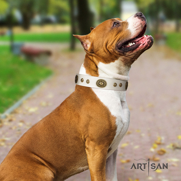 Amstaff daily walking natural genuine leather dog collar with adornments