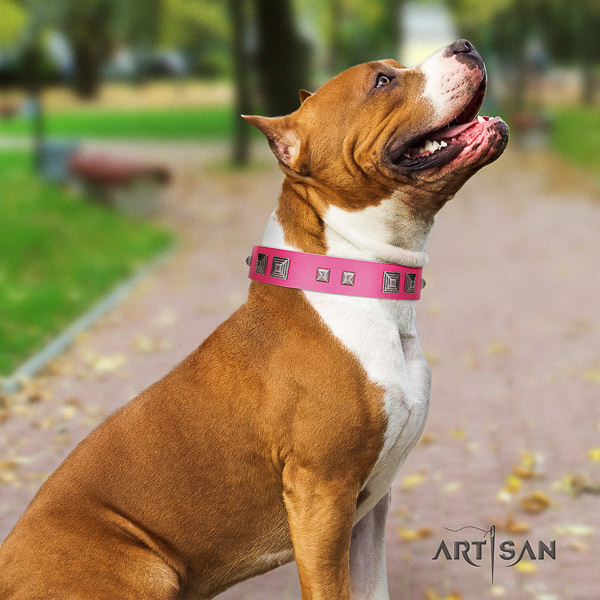 Amstaff unusual full grain genuine leather dog collar for walking