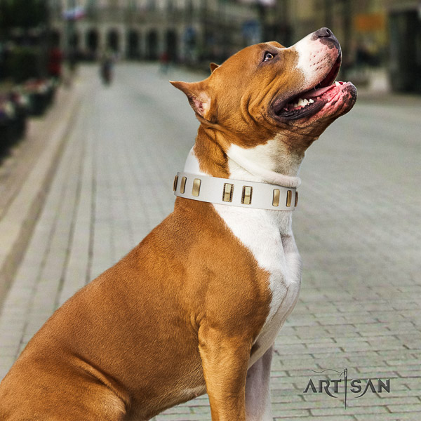 Amstaff studded natural genuine leather dog collar for basic training