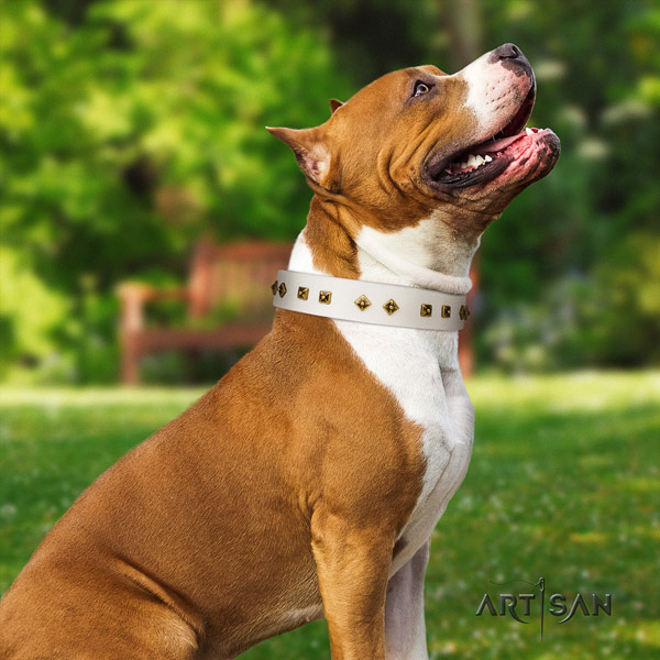 Amstaff easy wearing full grain natural leather dog collar with studs