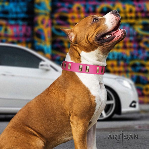 Amstaff fine quality leather dog collar for comfortable wearing