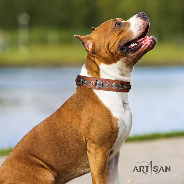 Amstaff significant genuine leather dog collar with adornments for everyday walking