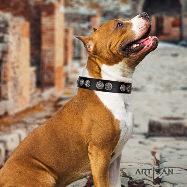 Amstaff convenient full grain natural leather dog collar for everyday use
