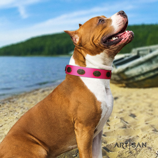 Amstaff basic training natural genuine leather dog collar with adornments