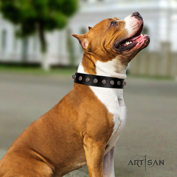 Amstaff studded full grain leather dog collar for daily use