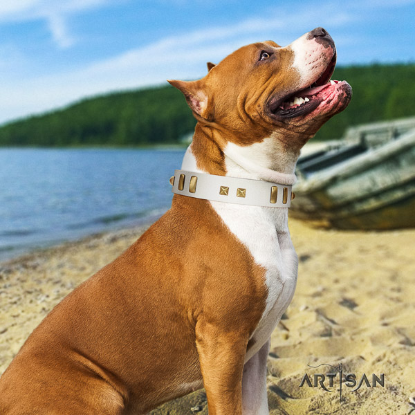 Amstaff fashionable full grain leather dog collar for comfy wearing