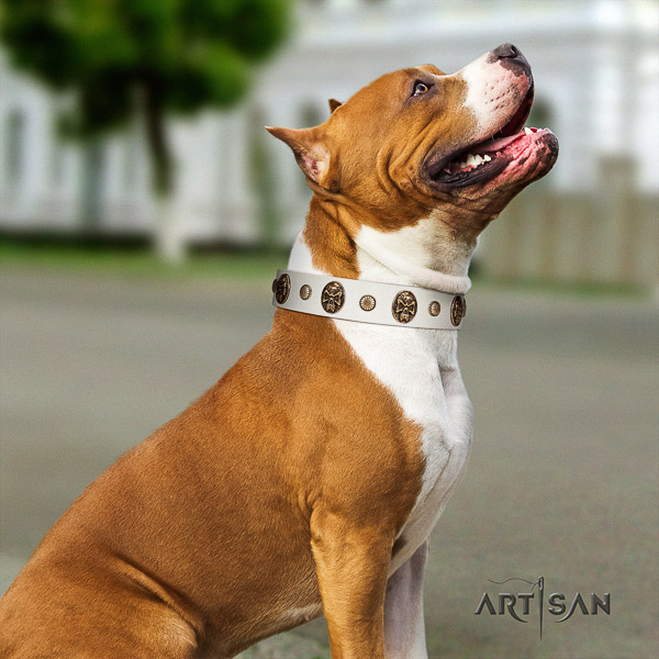 Amstaff studded leather dog collar for comfortable wearing