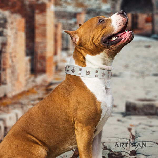 Amstaff easy to adjust natural genuine leather dog collar for everyday walking