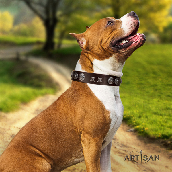Amstaff unique full grain natural leather dog collar for everyday walking