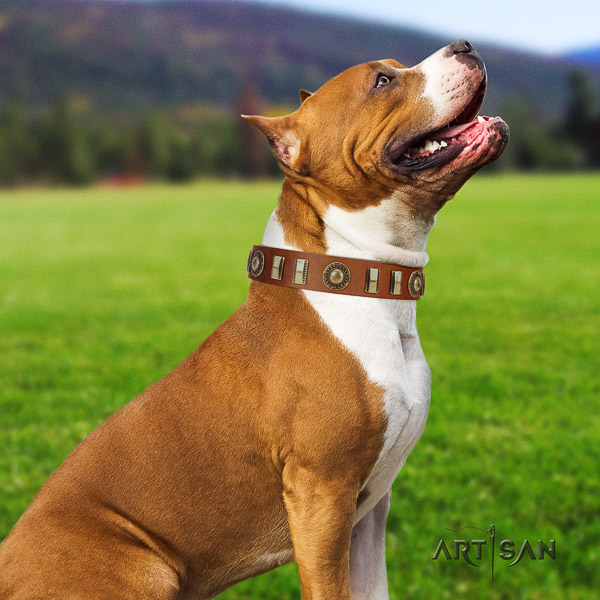 Amstaff easy wearing full grain leather dog collar for daily use