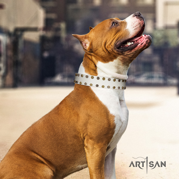 Amstaff exceptional full grain genuine leather dog collar for everyday walking