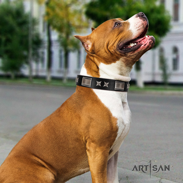 Amstaff handy use full grain genuine leather dog collar with decorations