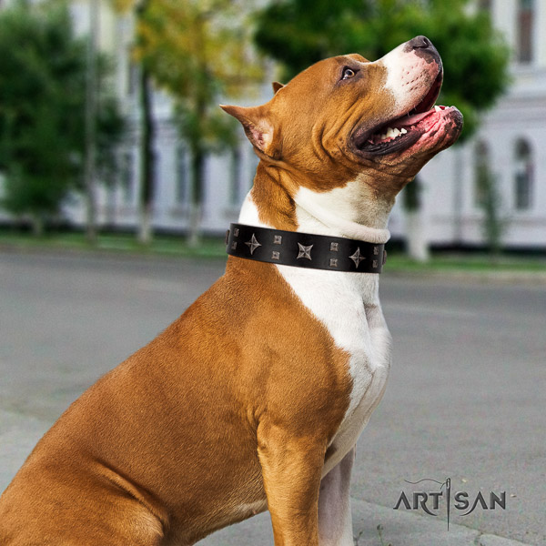 Amstaff fashionable natural genuine leather dog collar for walking