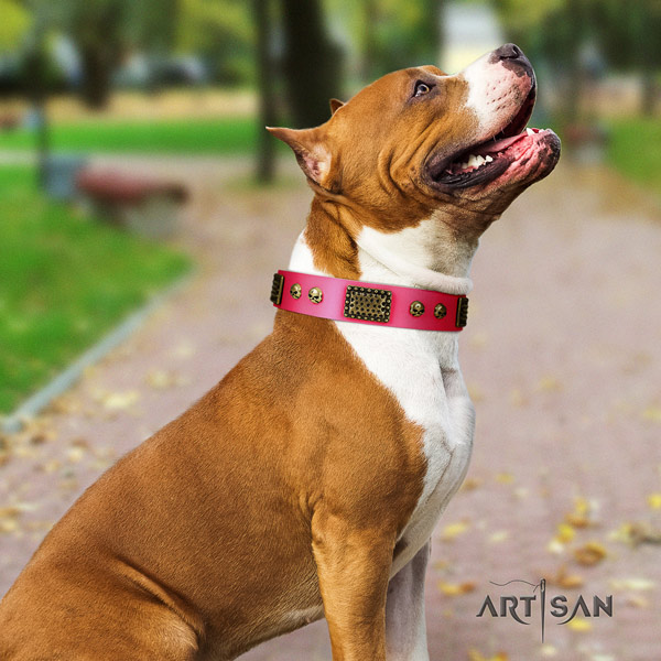 Amstaff everyday walking natural genuine leather dog collar with studs