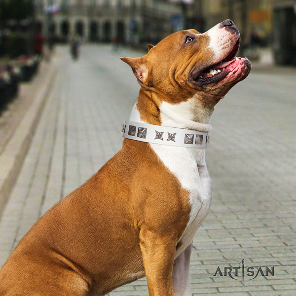 Amstaff impressive natural genuine leather dog collar for walking
