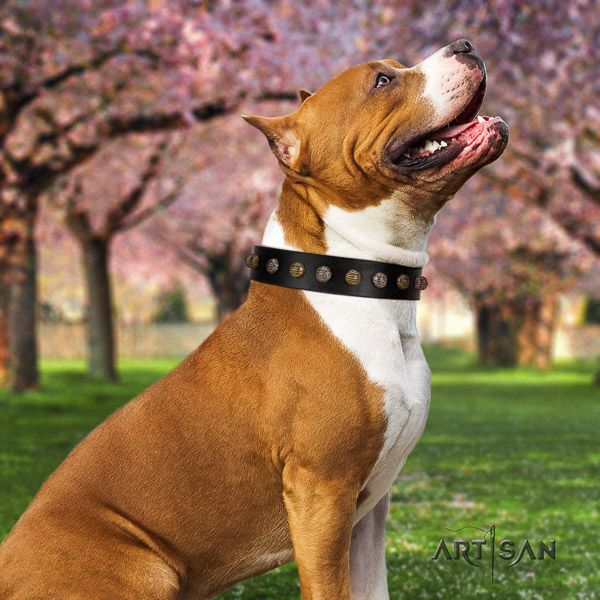 Amstaff handmade natural genuine leather dog collar for basic training