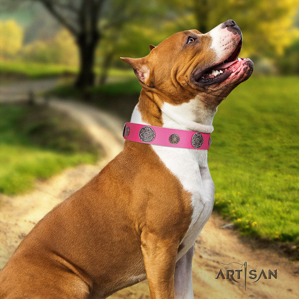 Amstaff best quality natural genuine leather dog collar for walking
