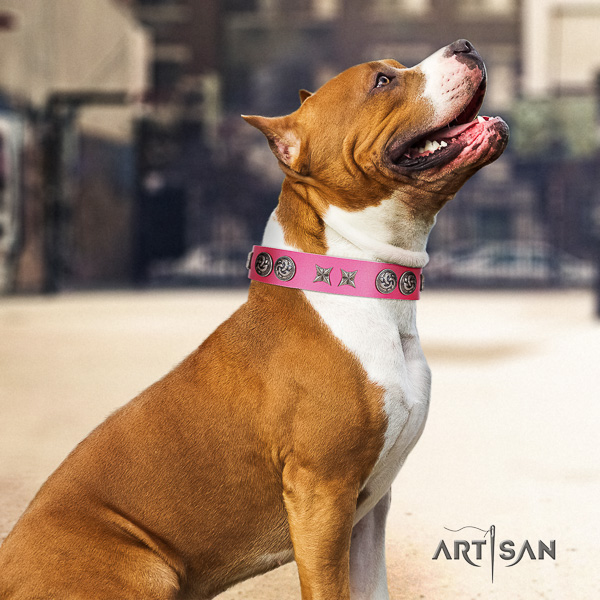 Amstaff embellished leather dog collar for daily use