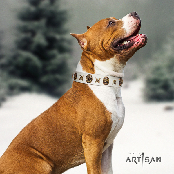 Amstaff amazing full grain genuine leather dog collar for everyday use