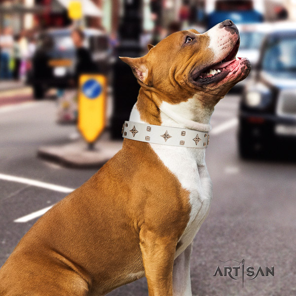Amstaff stylish full grain natural leather dog collar for basic training