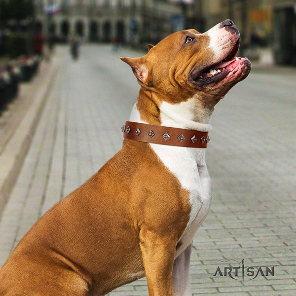 Amstaff convenient genuine leather dog collar for comfy wearing