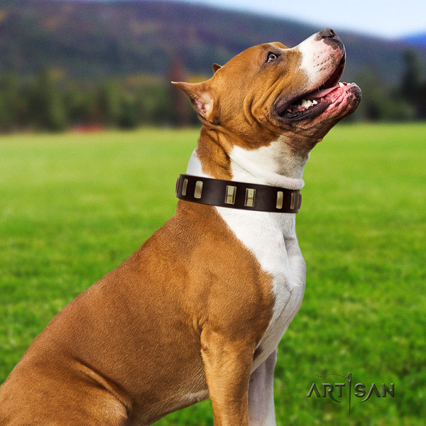Amstaff significant full grain natural leather dog collar for daily walking