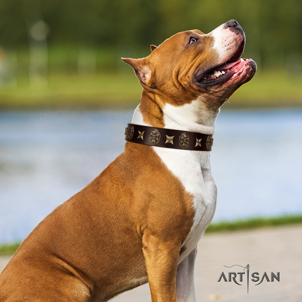 Amstaff unique leather dog collar for stylish walking