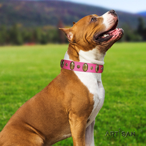 Amstaff exquisite genuine leather dog collar for everyday walking