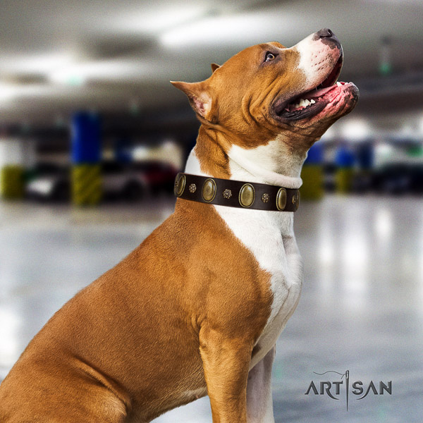 Amstaff convenient full grain leather dog collar for basic training