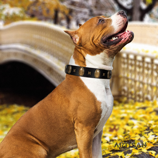 Amstaff fashionable genuine leather dog collar for fancy walking