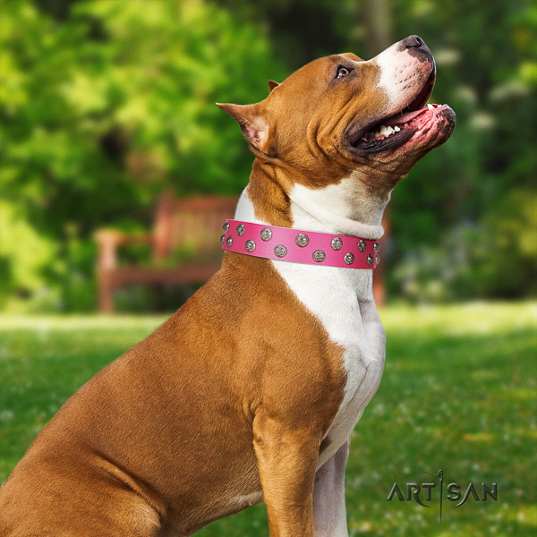 Amstaff handmade full grain natural leather dog collar for easy wearing