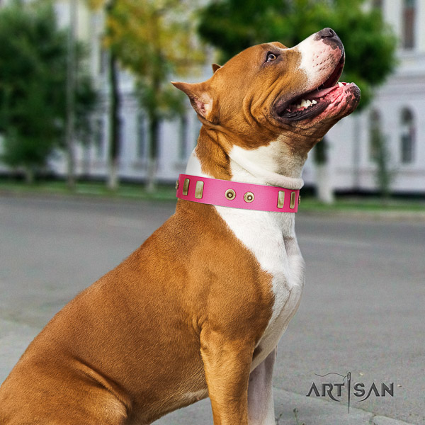 Amstaff embellished full grain leather dog collar for easy wearing