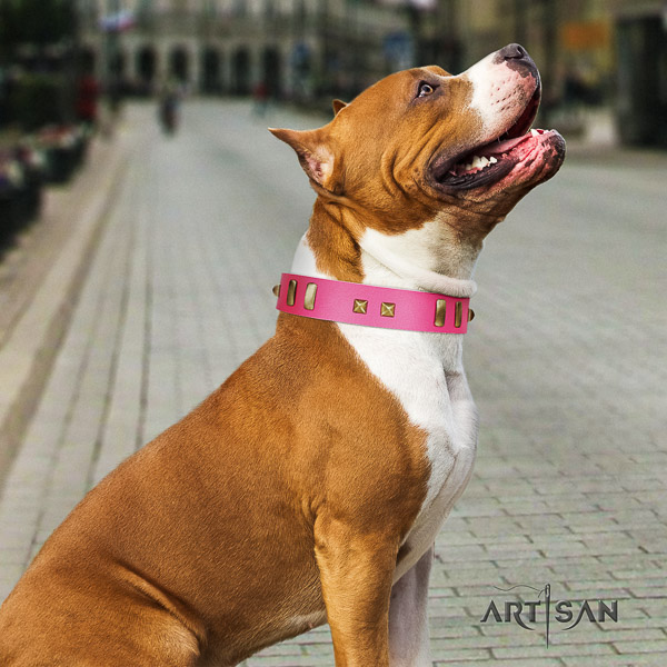 Amstaff trendy full grain genuine leather dog collar for comfy wearing