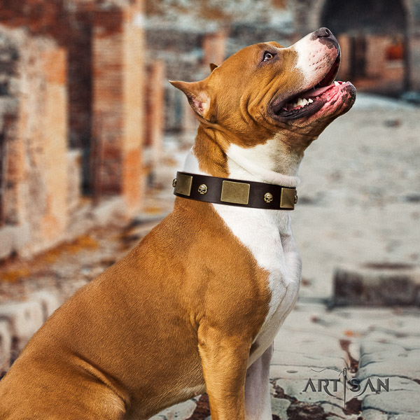 Amstaff studded full grain natural leather dog collar for everyday use