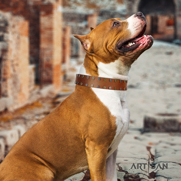 Amstaff top quality full grain leather dog collar for comfortable wearing