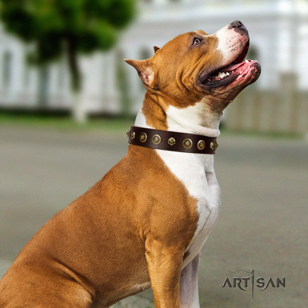 Amstaff handcrafted natural genuine leather dog collar for easy wearing