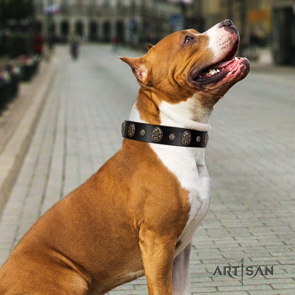 Amstaff fashionable full grain genuine leather dog collar for daily walking