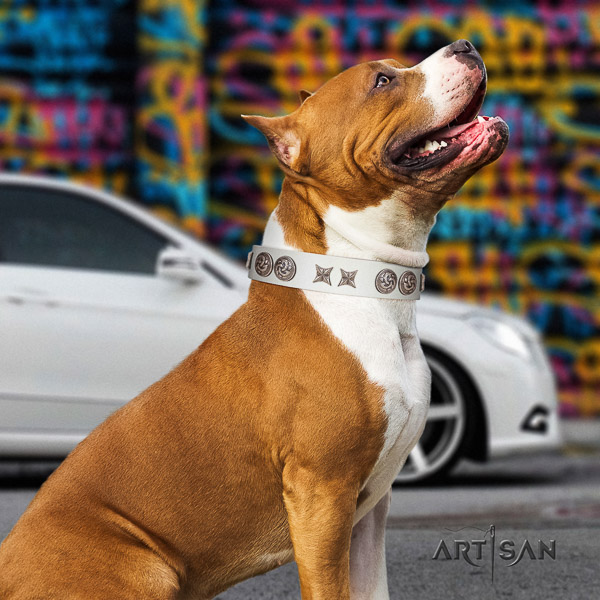 Amstaff top quality natural genuine leather dog collar for fancy walking