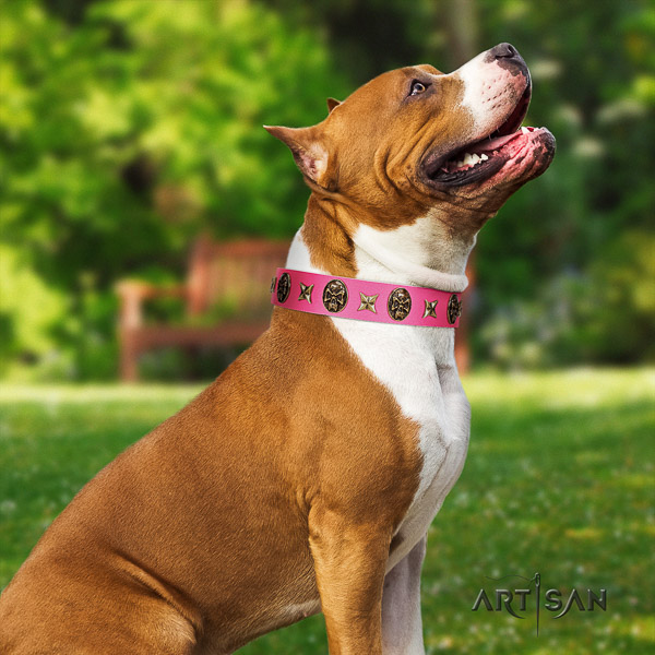 Amstaff adorned leather dog collar for fancy walking