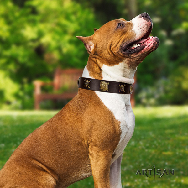 Amstaff unique full grain natural leather dog collar for comfortable wearing