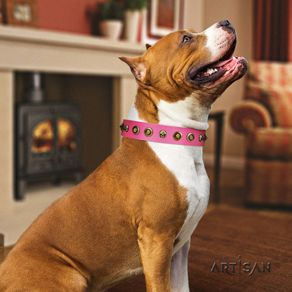 Amstaff decorated leather dog collar for everyday use